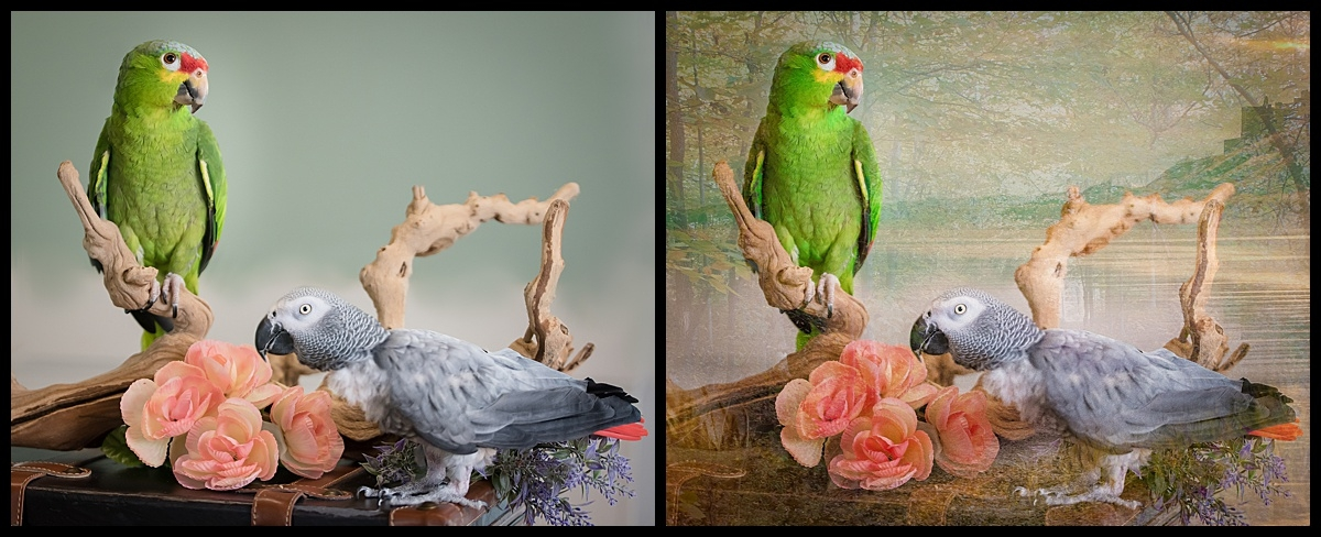 Artistic portraits of people and pets. West Palm Beach