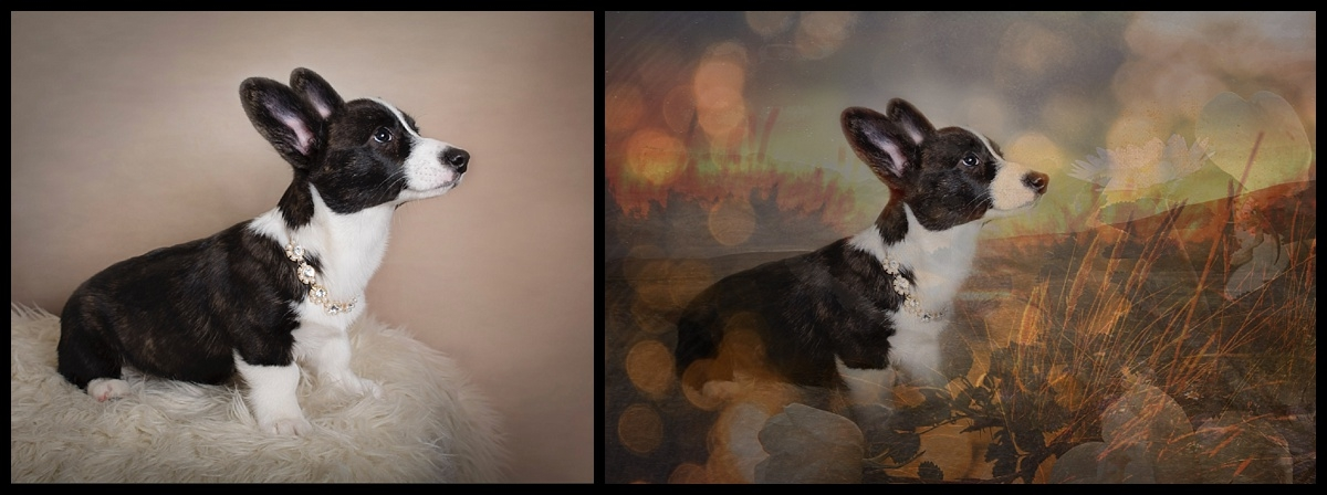 Before & After. Studio Pet Session , call us today 561-307-9875