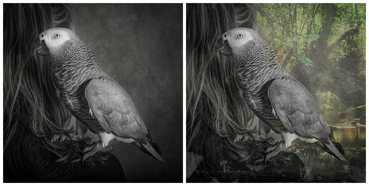 Before and after Bird Fine Art.