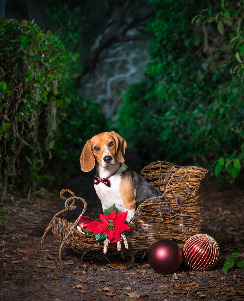 Make your holiday pet portrait session today!