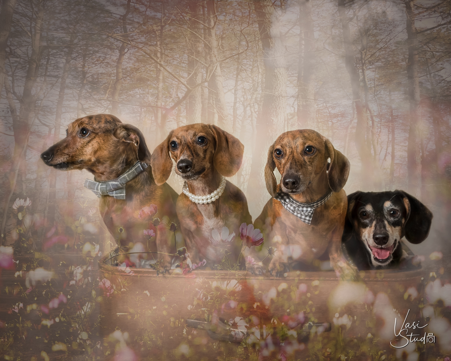 Animal Art Photography in Palm Beach