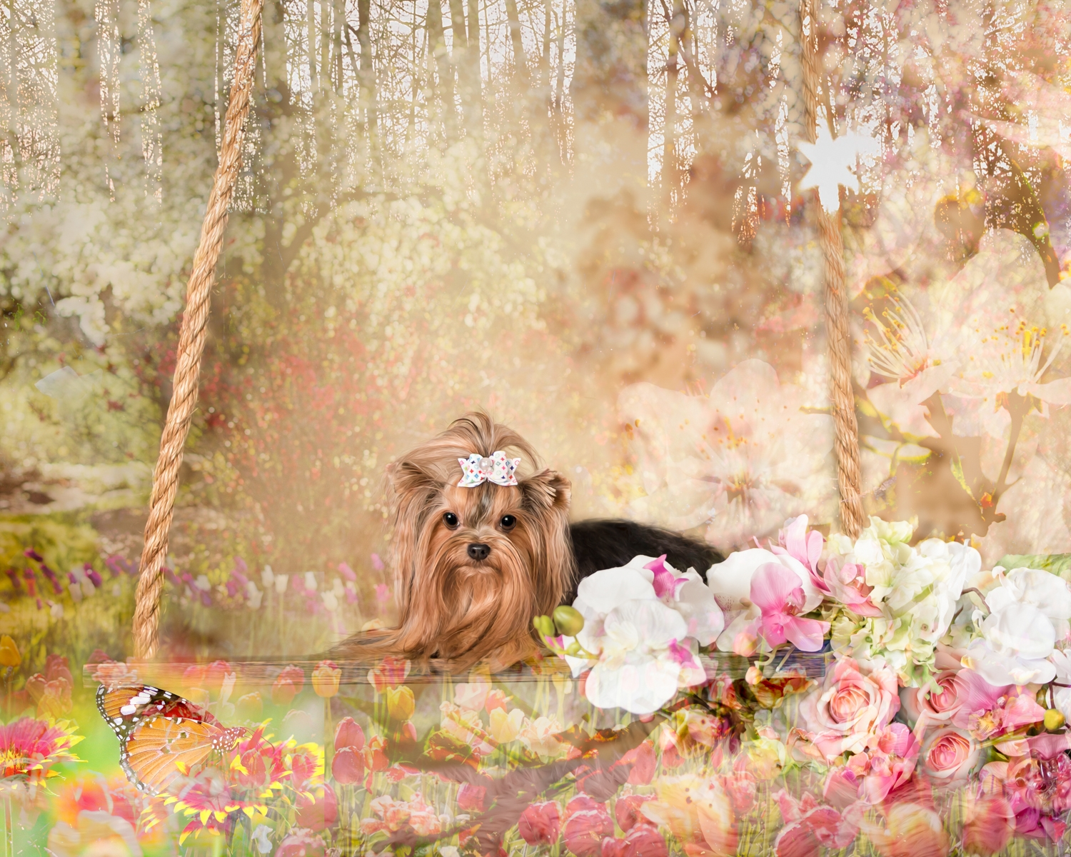Vasi Studio now offers Creative Art Signature Portraits. It is a fine art piece created from the photo you select. We can also customize your photo if you live out of town or your pet isn't with us anymore.  Together we will create beautiful and unique portraits
