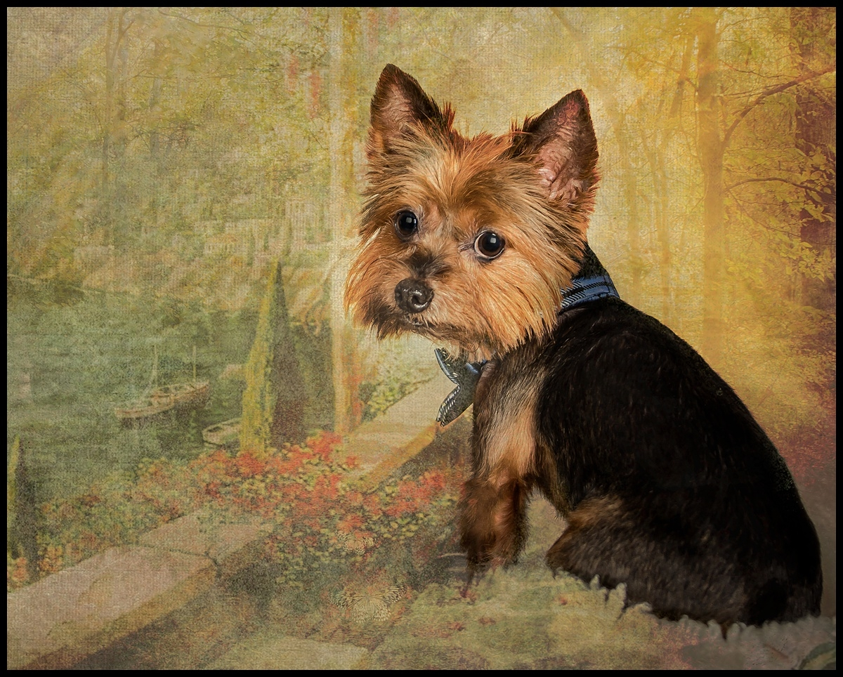 Artistic portraits of people and pets. Jupiter, South Florida