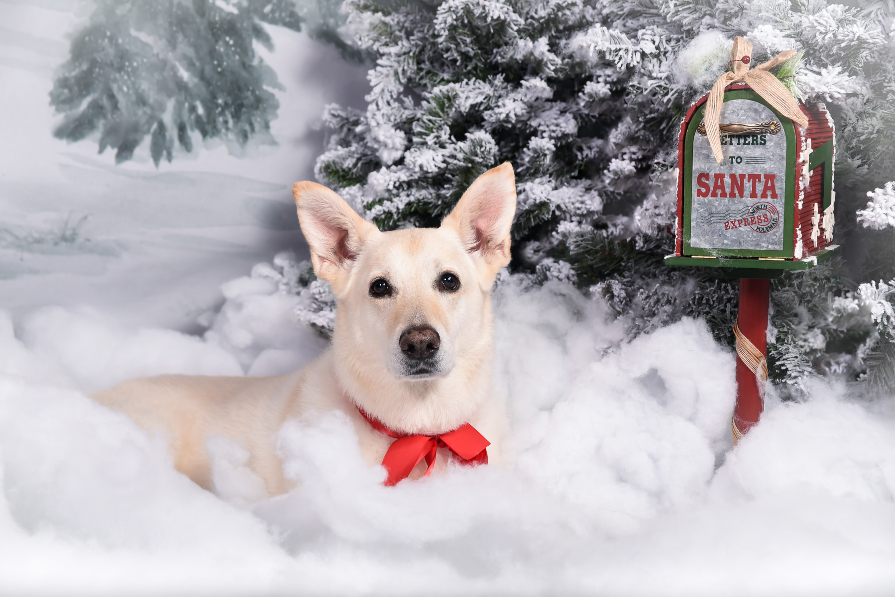 Holiday Pet Photography in Palm Beach Gardens, FL