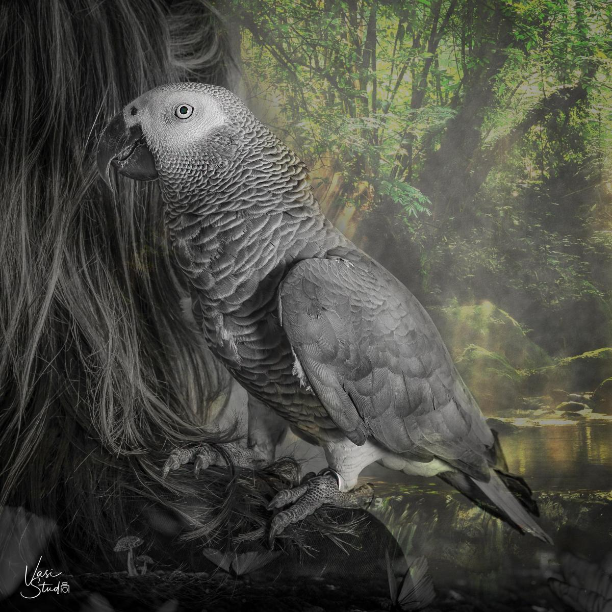 Parrot Bird Creative Art Piece. You can send us your photo and create a wall art piece for your home.