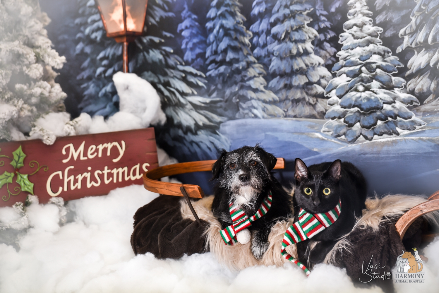Cats and Dogs; People and Pets Holiday Portraits