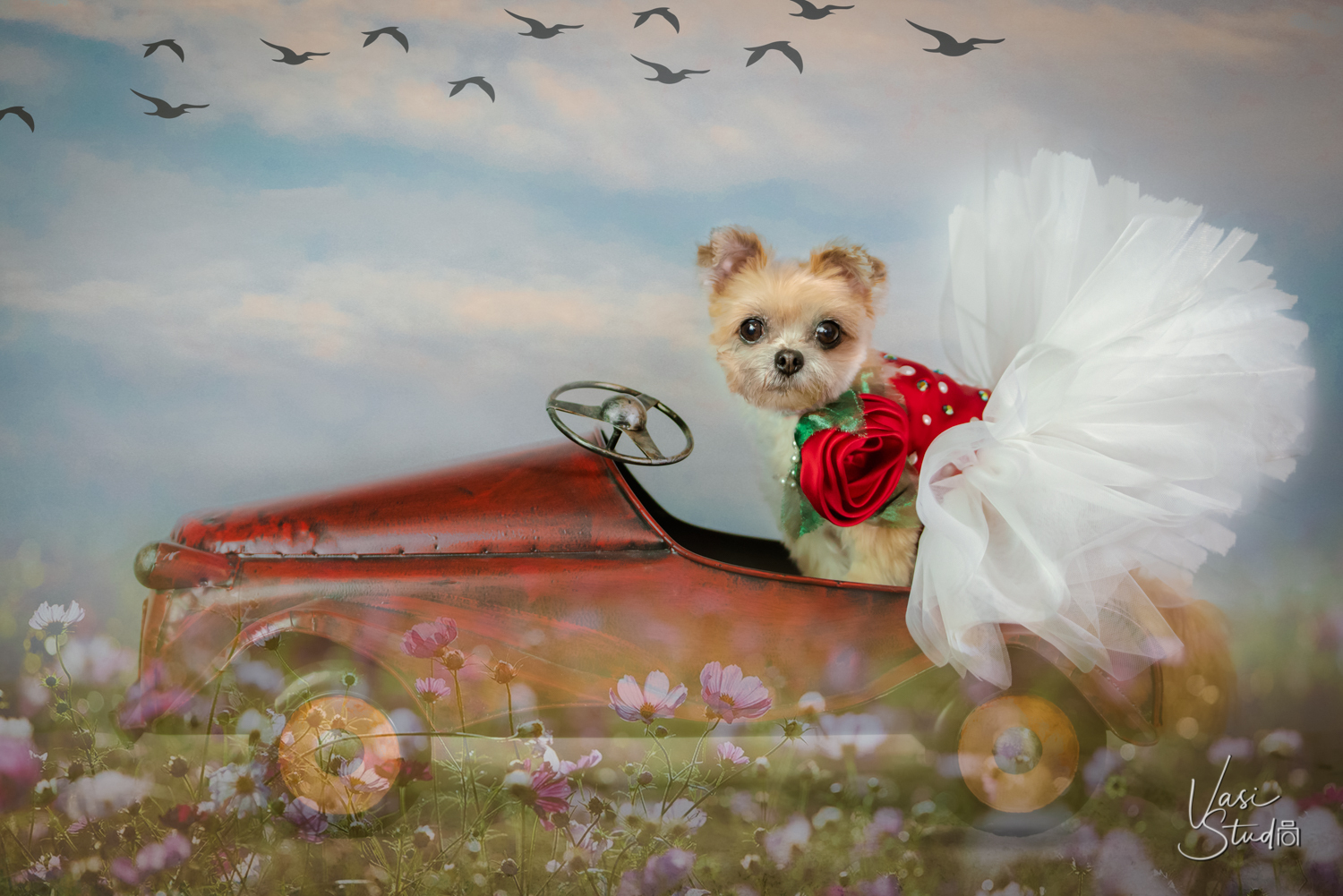 """Let's go for a ride!"" Beautiful outfit by @furdrobe . Fine Art Pet Photography by Vasi Siedman"